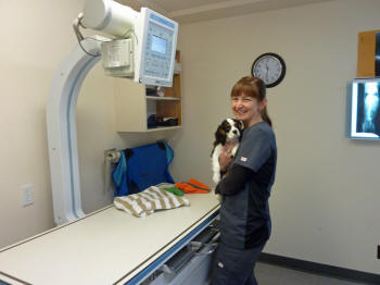 Jackie giving Charlie a snuggle before his radiograph